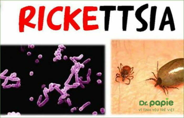 Vi khuẩn Rickettsia