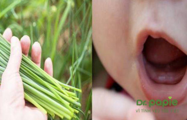 mẹo mọc răng không sốt bằng lá hẹ